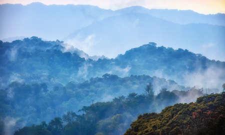 Selva tropical del Parque Nacional Nyungwe, Ruanda.