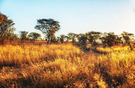 Savannah landscape in South Africa.