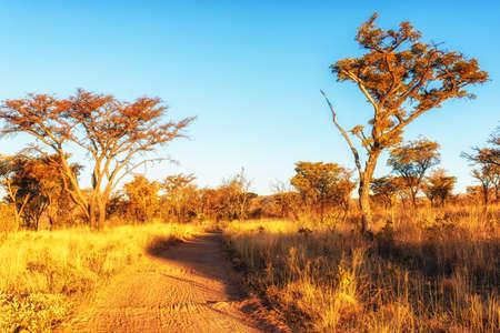 Savannah landscape in South Africa. Archivio Fotografico