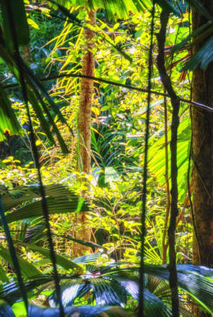 The Daintree Rainforest is a region on the northeast coast of Queensland, Australia and is the oldest continually surviving tropical rainforest in the world,