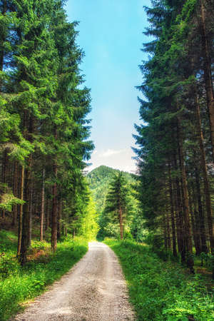 Gravel road leading into the forest, Upper Austria.