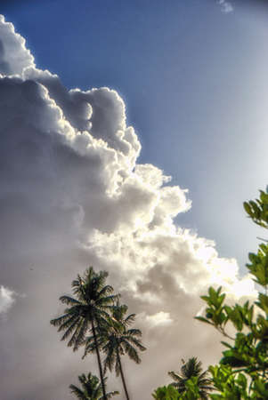 Low Angle View Of Green Coconut Palm Tree Against Sky 写真素材