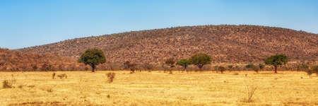 Beautiful savannah landscape in Welgevonden South Africa.