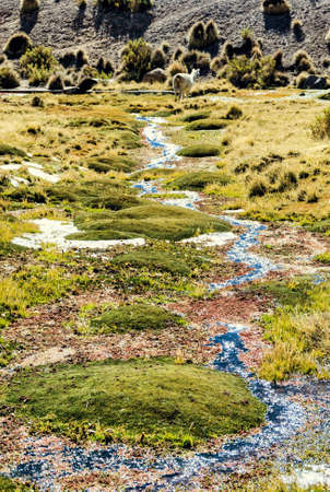 Stream in a green meadow. Lauca National Park. Arica y Parinacota Region. Chile.