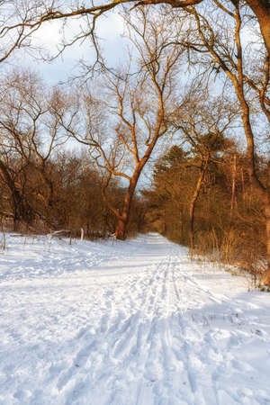 Path in a snowy winter forest during a cold winter day with fresh snowfall