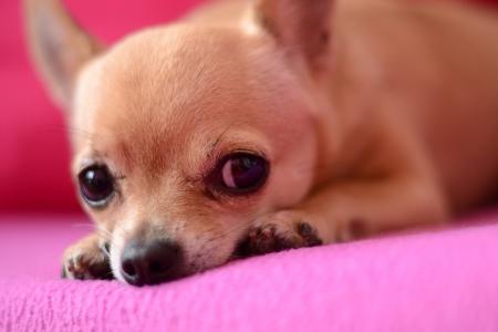 dedo me�ique: Perro