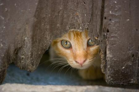 kitten hiding behind an old by Reklamní fotografie