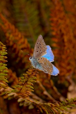 Butterfly and autumn photo