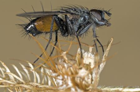 super macro: macro fly portrait. Stock Photo