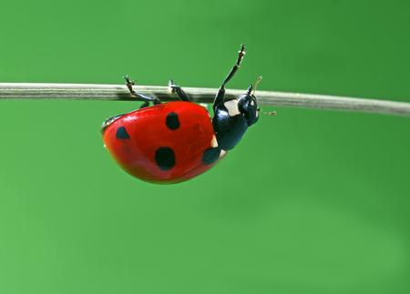 ladybug on leaf: ladyburg