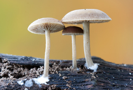 country kitchen: Mushrooms in the nature