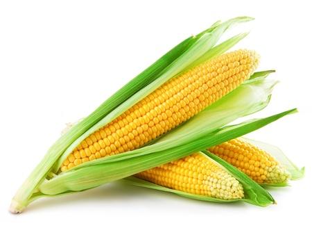 Ein Ohr des Mais auf einem weißen Hintergrund Standard-Bild