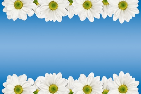 white flowers on a blue background photo