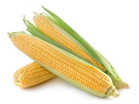 espiga de trigo: El maíz aislado en un fondo blanco Foto de archivo