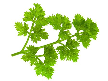 Branch of fragrant fresh parsley on a white background  photo