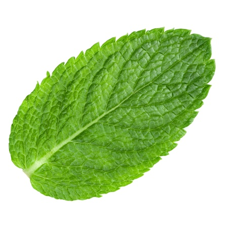mint leaves isolated on white background.  Stock Photo