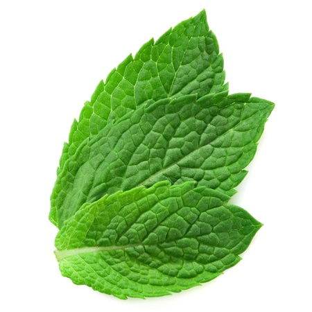 menthol: three fresh mint leaves isolated on white background.