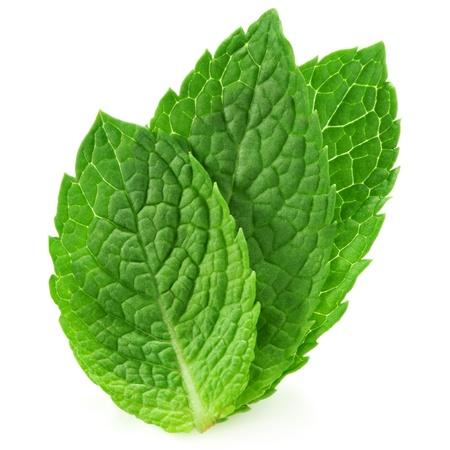 menta: tres hojas de menta fresca aislados en fondo blanco. Estudio macro Foto de archivo