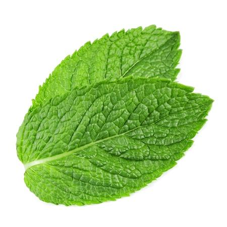 menta: hojas de menta fresca aislados en fondo blanco. Estudio macro