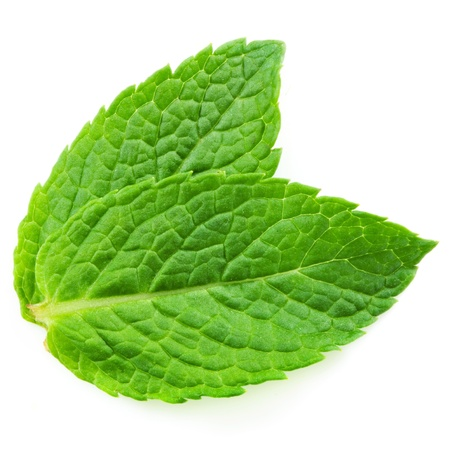 Two fresh mint leaves isolated on white background. Studio macro  photo