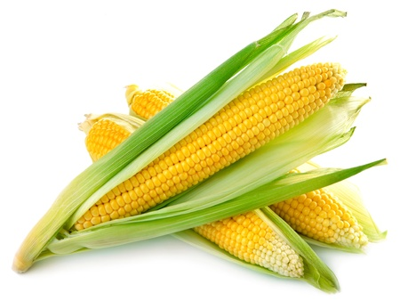 sweetcorn: An ear of corn isolated on a white background