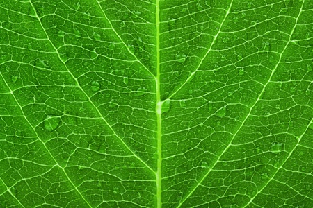 Green leaf texture with droplets  photo
