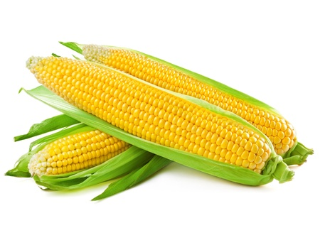 sweetcorn: An ear of corn isolated on a white background  Stock Photo