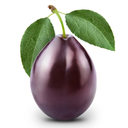 purple leaf plum: plum isolated