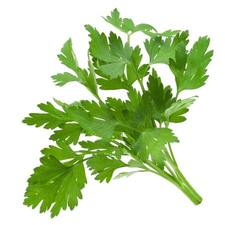 parsley isolated on white  photo