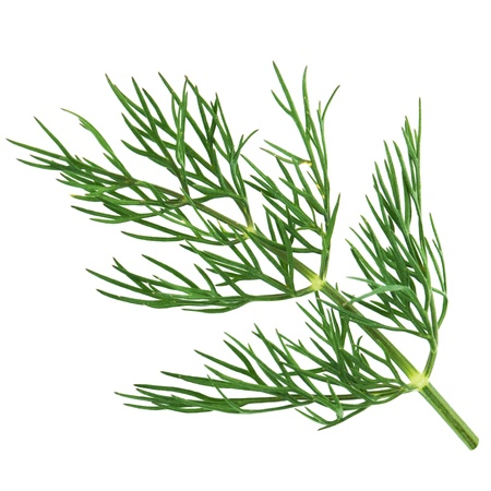 Green dill isolated on white background. Studio macro