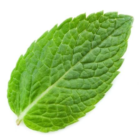 three leaf: fresh mint leaves isolated on white background. Studio macro  Stock Photo