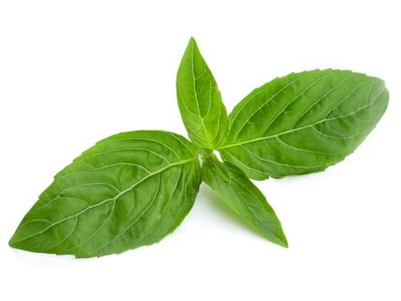 basilic: Basil isol� sur fond blanc