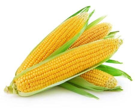 husk: An ear of corn isolated on a white background   Stock Photo