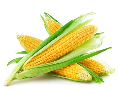 husk: An ear of corn isolated on a white background