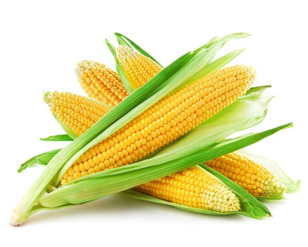 corn kernel: An ear of corn isolated on a white background