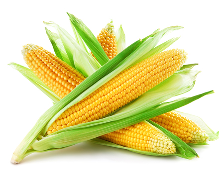 husk: corn isolated on a white background
