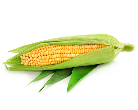 espiga de trigo: Uno de mazorca de ma�z aislado en un fondo blanco