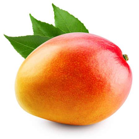 mango fruta: fruta de mango aislado en fondo blanco Foto de archivo