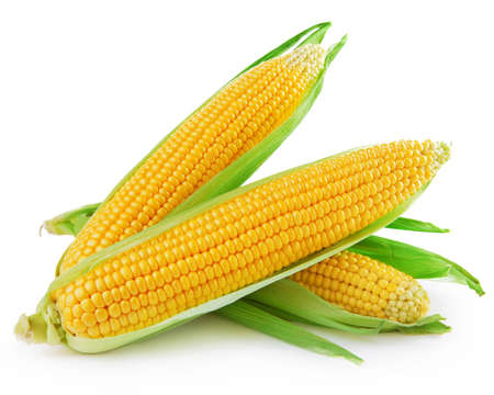 the ears of corn: An ear of corn isolated on a white background   Stock Photo