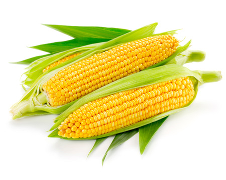 Een oor van maïs geïsoleerd op een witte achtergrond