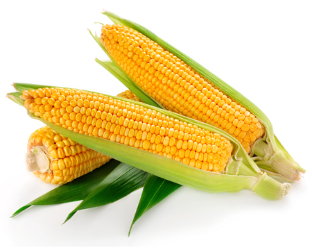 maize: An ear of corn isolated on a white background   Stock Photo