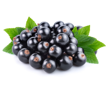 black currants with leaves on white background