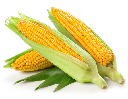 An ear of corn isolated on a white background   Stock fotó