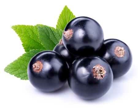 black currants Stock Photo