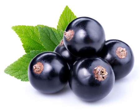 black currants photo