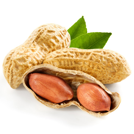 goober: peanut isolated on white background   Stock Photo