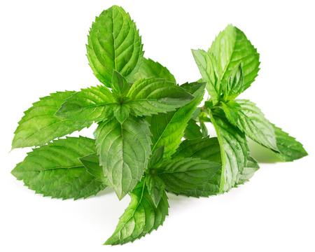 mint leaves isolated photo