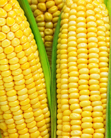 yellow corn: corn grains