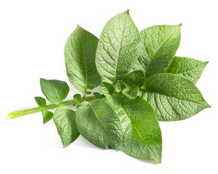 Aardappel blad op een witte achtergrond