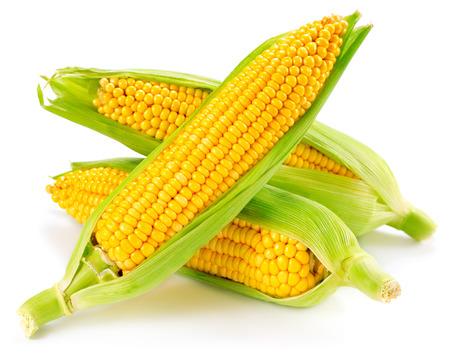 espiga de trigo: Una espiga de trigo aislado en un fondo blanco